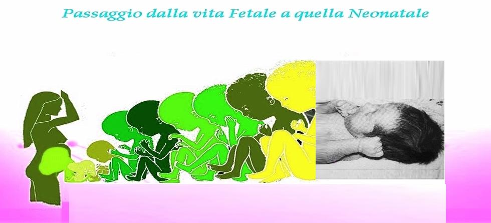 Passaggio Feto-Neonatale